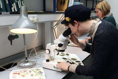 Female student looking at plant samples through a microscope