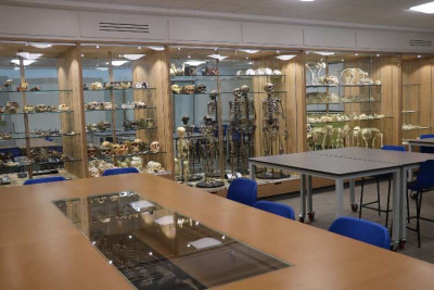 Display cases containing fossil casts of primate and hominim skeletons